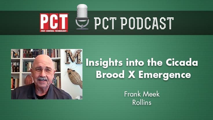 Podcast: Insights into the Cicada Brood X Emergence