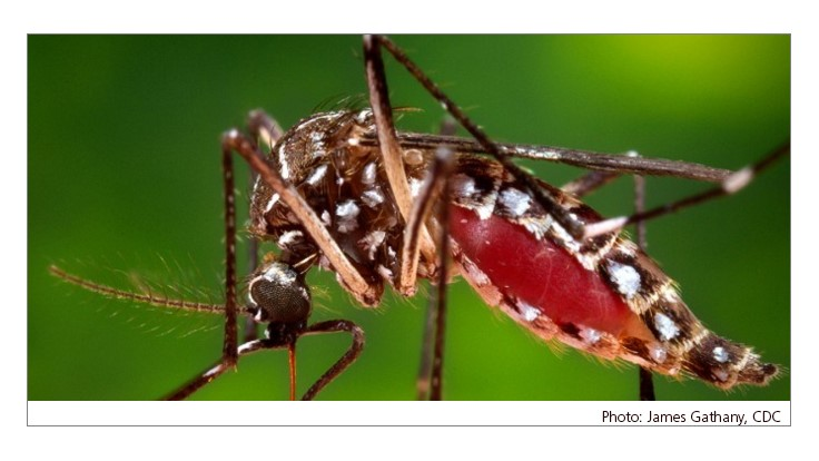 CDC Issues Zika Virus Update for Spring Travelers
