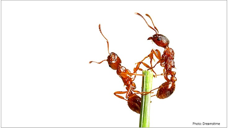 New Research Provides Insights into How Ants Communicate