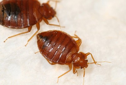 What's Trending in Bed Bugs?