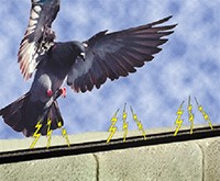 Newly Patented Technology on Bird Jolt Track