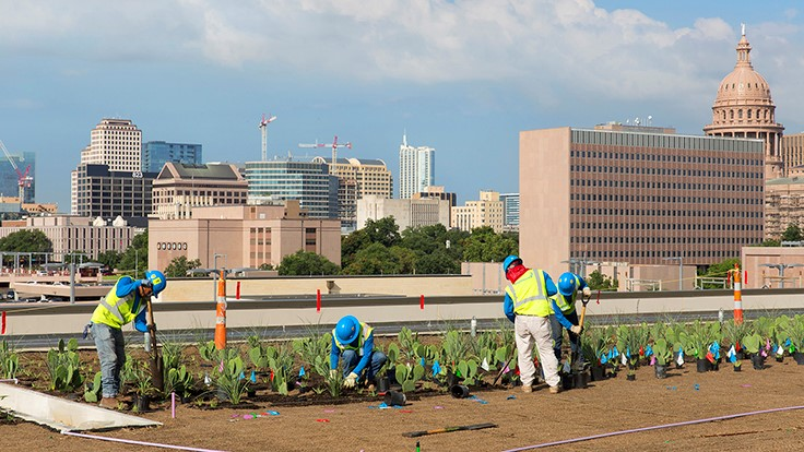 BrightView installs green roof