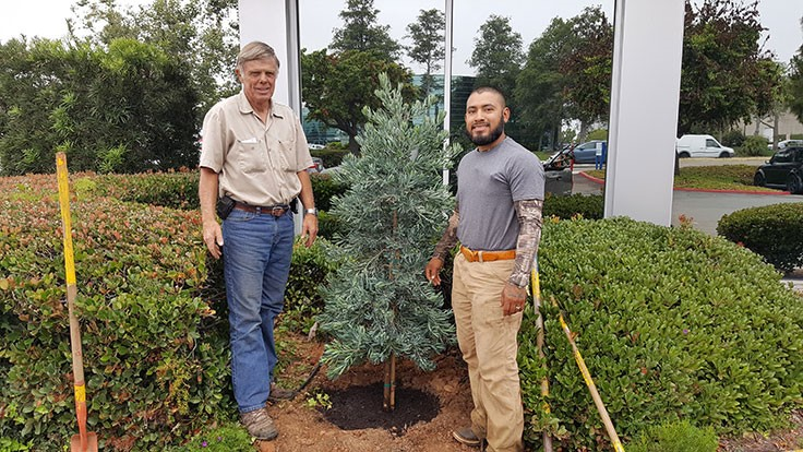 US university receives special tree