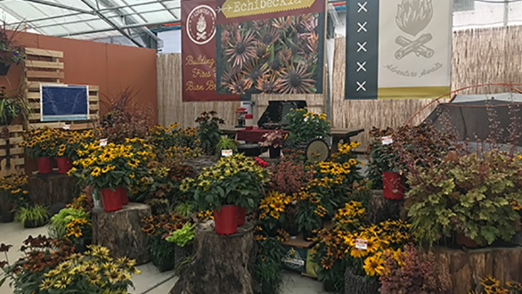 2017 Spring Trials Day 5: Sunflowers, sleepaways and shrubs