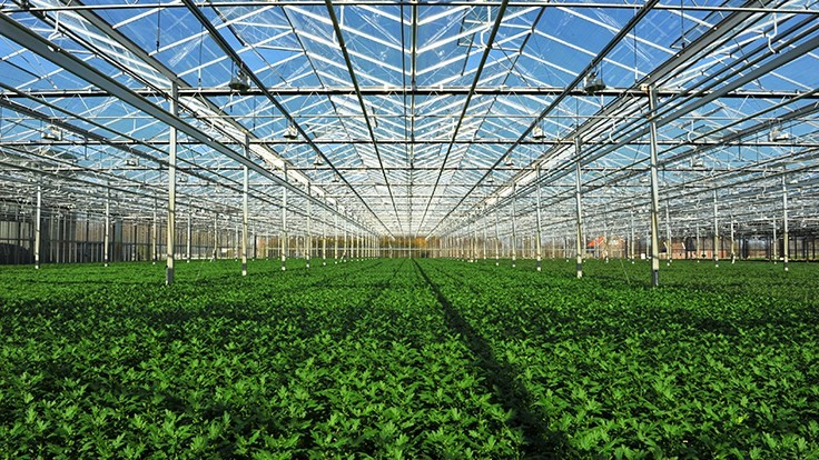 Intergrow Greenhouses moves planned New York tomato