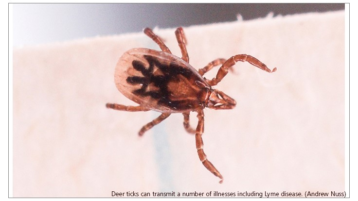 Tick Genome Reveals Inner Workings of a versatile Blood-Guzzler