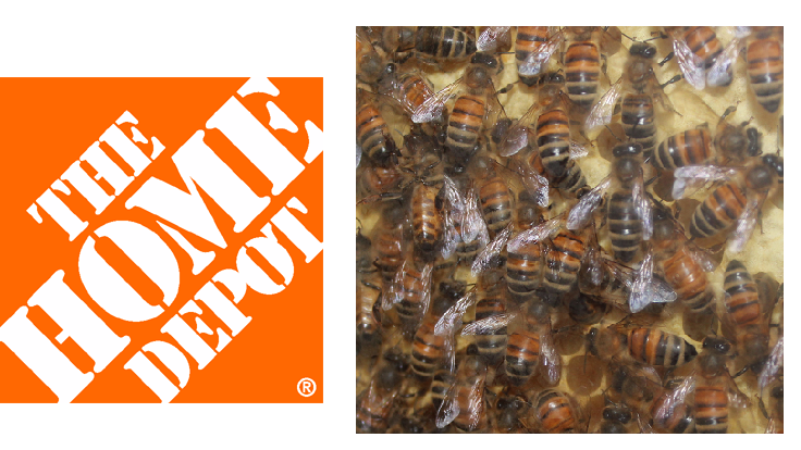 Home Depot to phase out neonics by 2018