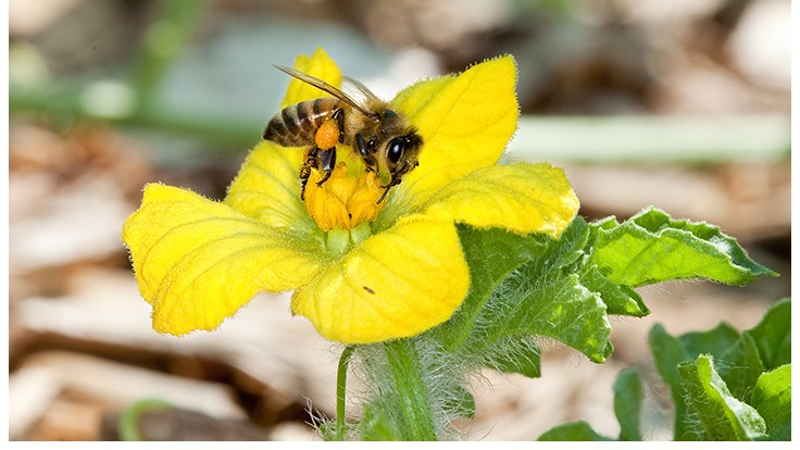 Comment Period for EPA's New Pollinator Health Plan Ends on July 29