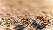 Most Ants In A Colony Are Slackers, Study Finds