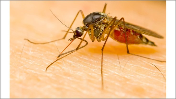 Terminix Releases List of Top 20 Mosquito-Infested Cities