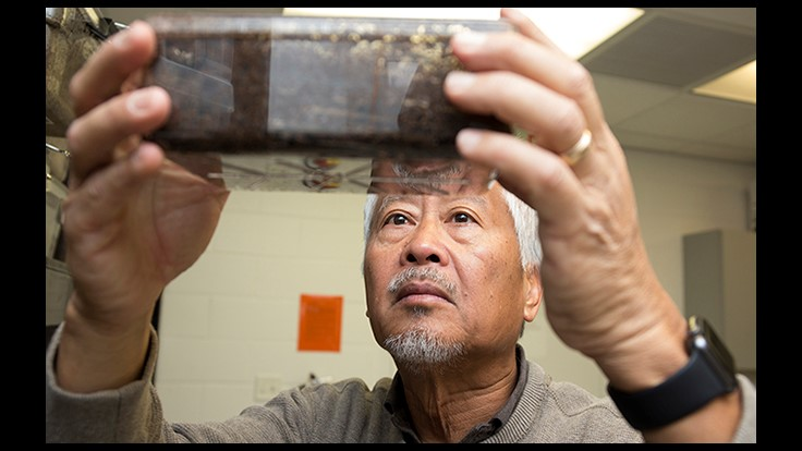 Neighboring Termite Colonies Re-Invade, UF Research Shows
