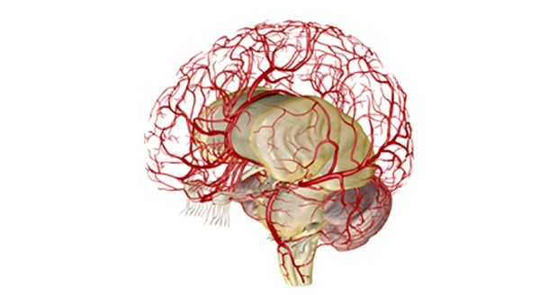 US neurovascular market more than $600M by 2020