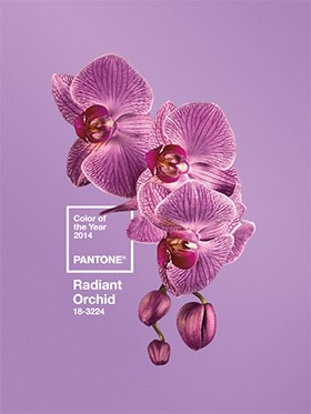 Pantone names Radiant Orchid 2014 color of the year
