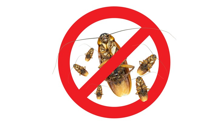 Fair Expectations: Reducing Pest Control Claims Severity