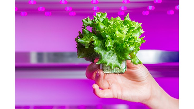 First large-scale commercial vertical farm in Europe to be set up in the Netherlands