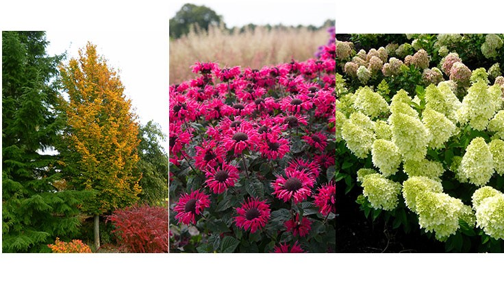 2017 new varieties: Plants Nouveau