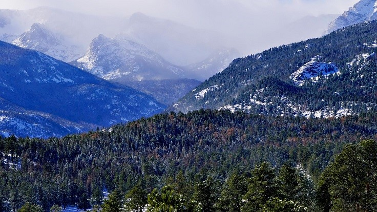 Report highlights Colorado forest health concerns