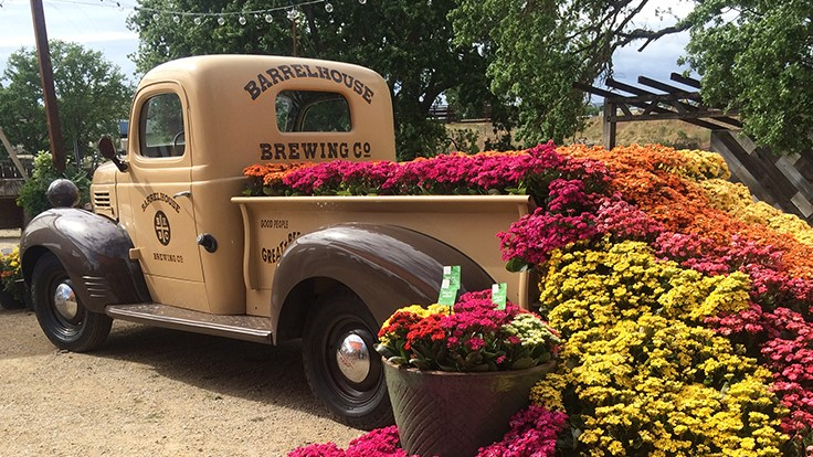 Spring Trials Day 2: Brews, blooms and a truck full of kalanchoe
