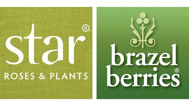 Star Roses and Plants acquires Fall Creek's BrazelBerries