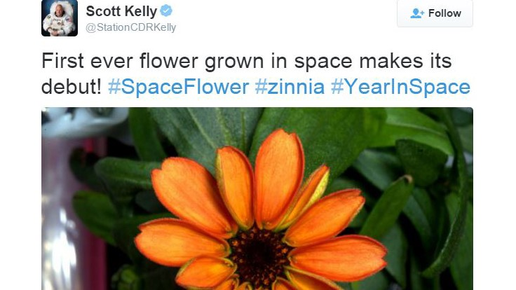 Sakata flowers first to be grown in space