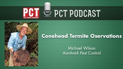 Conehead Termite Observations