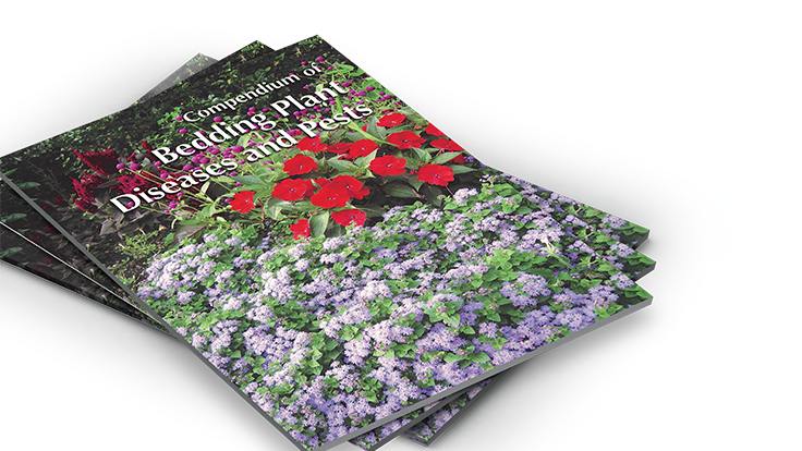 Q&A: Everything growers need to know about pest and disease issues in bedding plants