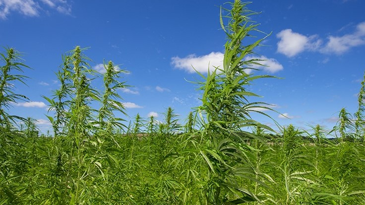 Southeast U.S. States See More Hemp-Derived CBD Consumption Than Elsewhere